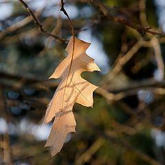 """фото """"Последный осенний лист"""""""