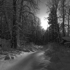 """фото """"Свет зимнего леса"""""""