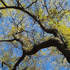 "фото ""Дърво жълто"""