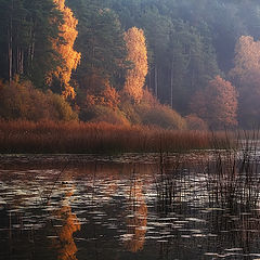"""photo """"Autumn's coloured quietness"""""""