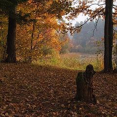 "photo ""Autumn leafs"""