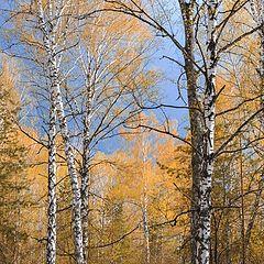 "photo ""Autumn forest"""