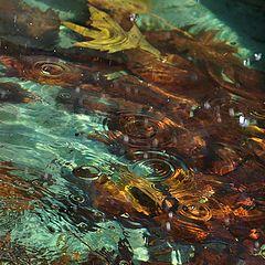 """фото """"Осенний дождь"""""""