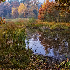 "photo ""Autumn in swamp"""