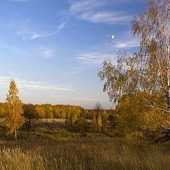 """фото """"Желтая осень"""""""
