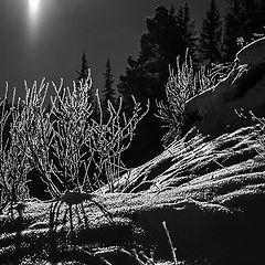 """фото """"В свете Луны"""""""