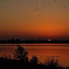 """фото """"И птицы стаей пролетая..."""""""