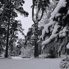 "photo ""snowiness"""