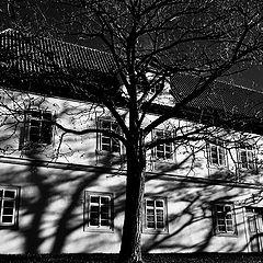 "фото ""Дерево и дом"""
