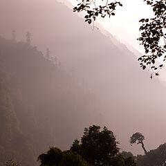 "фото ""Trees. mountains, fog, light"""