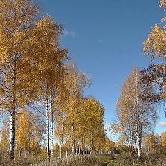 """фото """"Дорога в осень."""""""