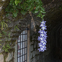 "photo ""Flowers of casemates"""