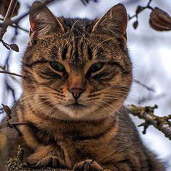 """фото """"кот на дереве"""""""