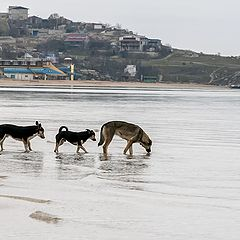 """фото """"собаки на пляже"""""""
