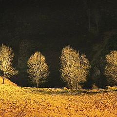 """фото """"ombre et lumière"""""""
