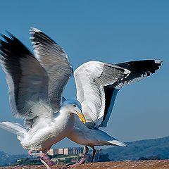 """фото """"Birds # 2 San Francisco Pier 41"""""""