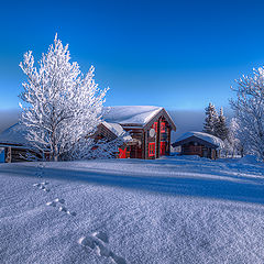 "photo ""Winterland"""