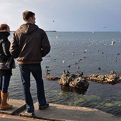 """фото """"Ожидая белых лебедей"""""""