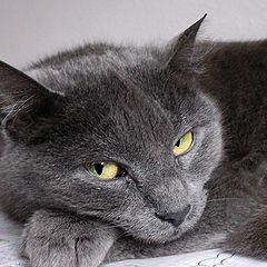 "photo ""A cat called Grauchen"""