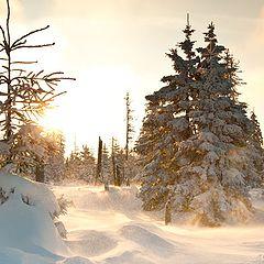 "фото ""Snow&Wind"""