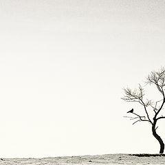 "фото ""Одиночество"""
