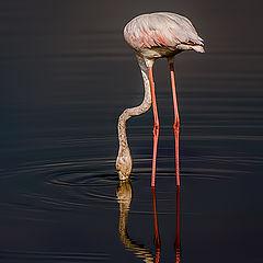 """фото """"Reflections 03"""""""