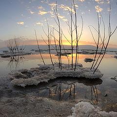 """photo """"Dead Sea"""""""