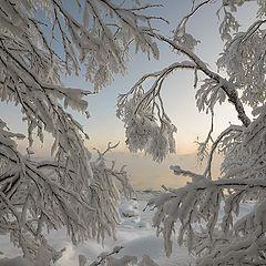 """фото """"Морозный натюрморт"""""""