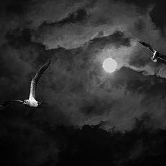 "фото ""Night flight"""