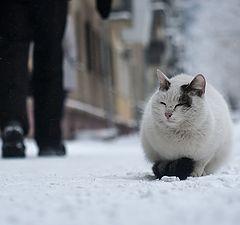 """photo """"cat"""""""