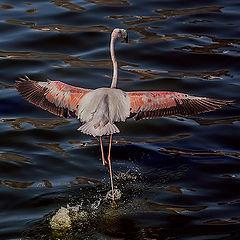 "фото ""Dancing on the water"""