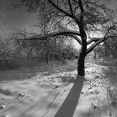 """фото """"зимний день"""""""