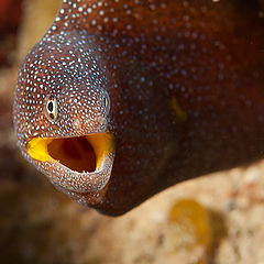 "photo ""Conversation with moray"""