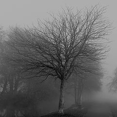 "фото ""fog"""