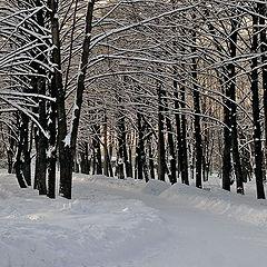 """фото """"по тропинкам зимы.."""""""