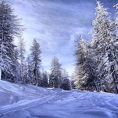"""photo """"winter's Tale"""""""
