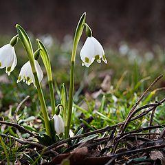 "фото ""Spring time"""