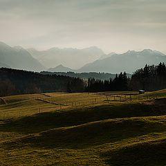 "фото ""Long shadows in the green"""