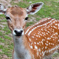 "photo ""Bambi"""