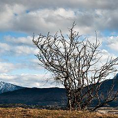 "фото ""The tree"""