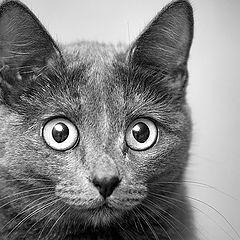 """фото """"Кошка"""""""