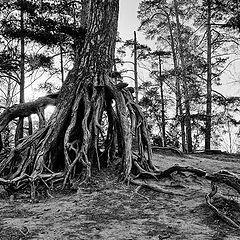 "photo ""tree roots"""