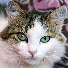 "photo ""Cat's-eye"""