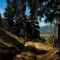 """фото """"The path"""""""