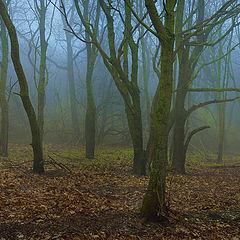 """фото """"Таинственный лес"""""""