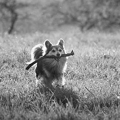 """фото """"простое собачье щастье"""""""