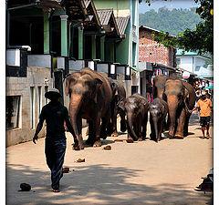 "фотоальбом ""Sri Lanka"""