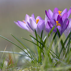 """фото """"весны цветение"""""""
