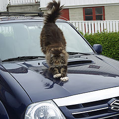 "photo ""My car - I want to scratch, do not want to scratch."""