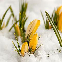 "фото ""Весна идет,весне дорогу."""